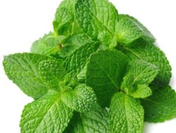 Mint Leaves Do Miracles on Your Face