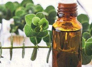 Eucalyptus Oil: